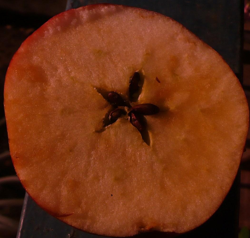 pommes-trois-002.JPG