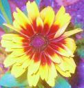 La gaillarde : mandala solaire