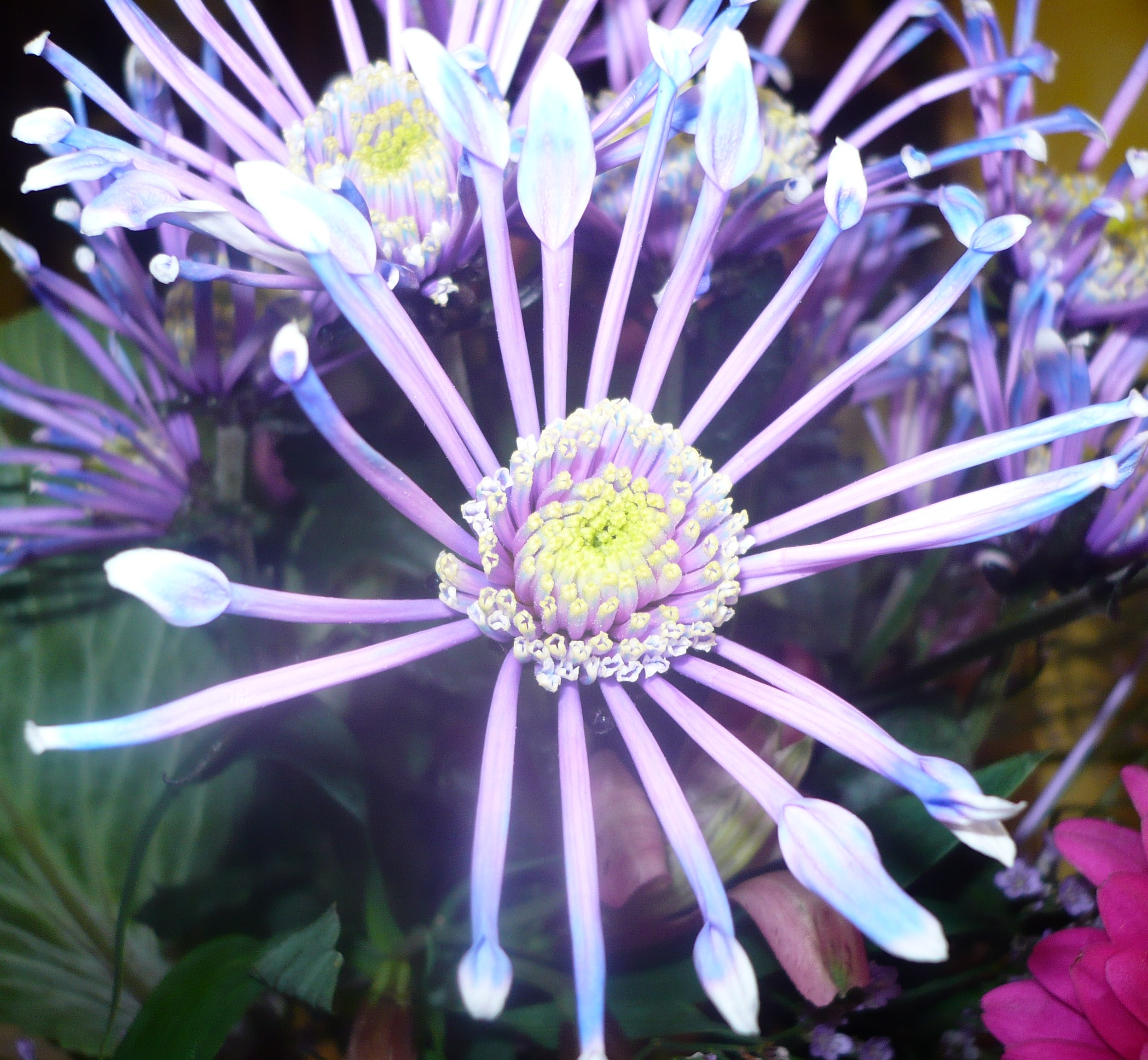 bouquet-adrien-004.JPG