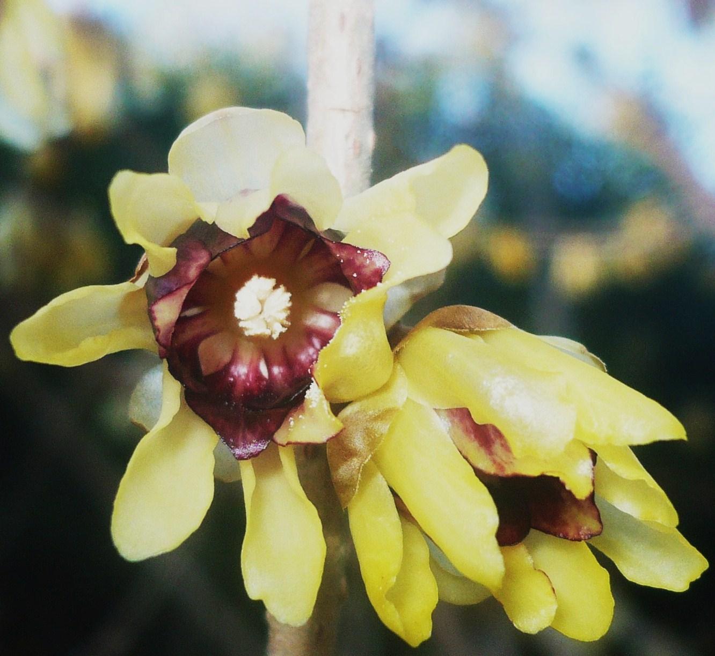 fleur-du-parc-jourdan-debut-2009-006.JPG