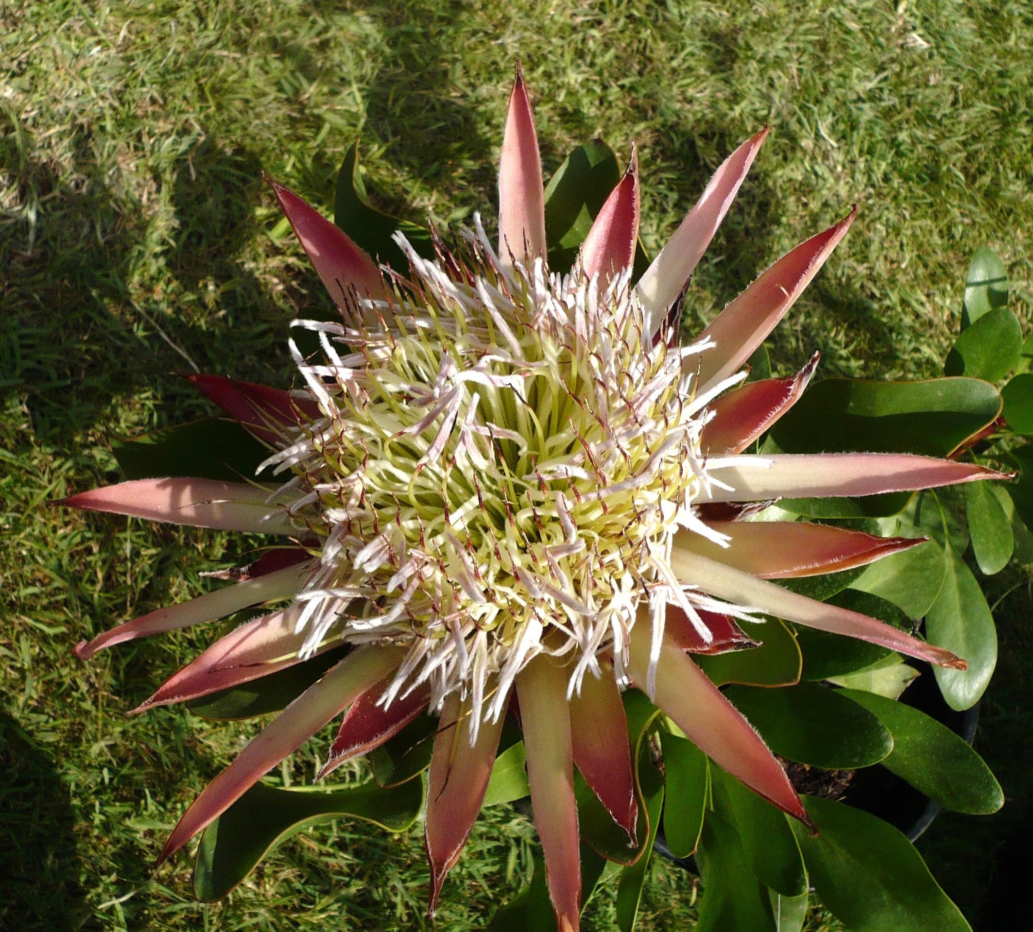 le-jardin-dalbertas-et-ses-splendeurs-028.JPG