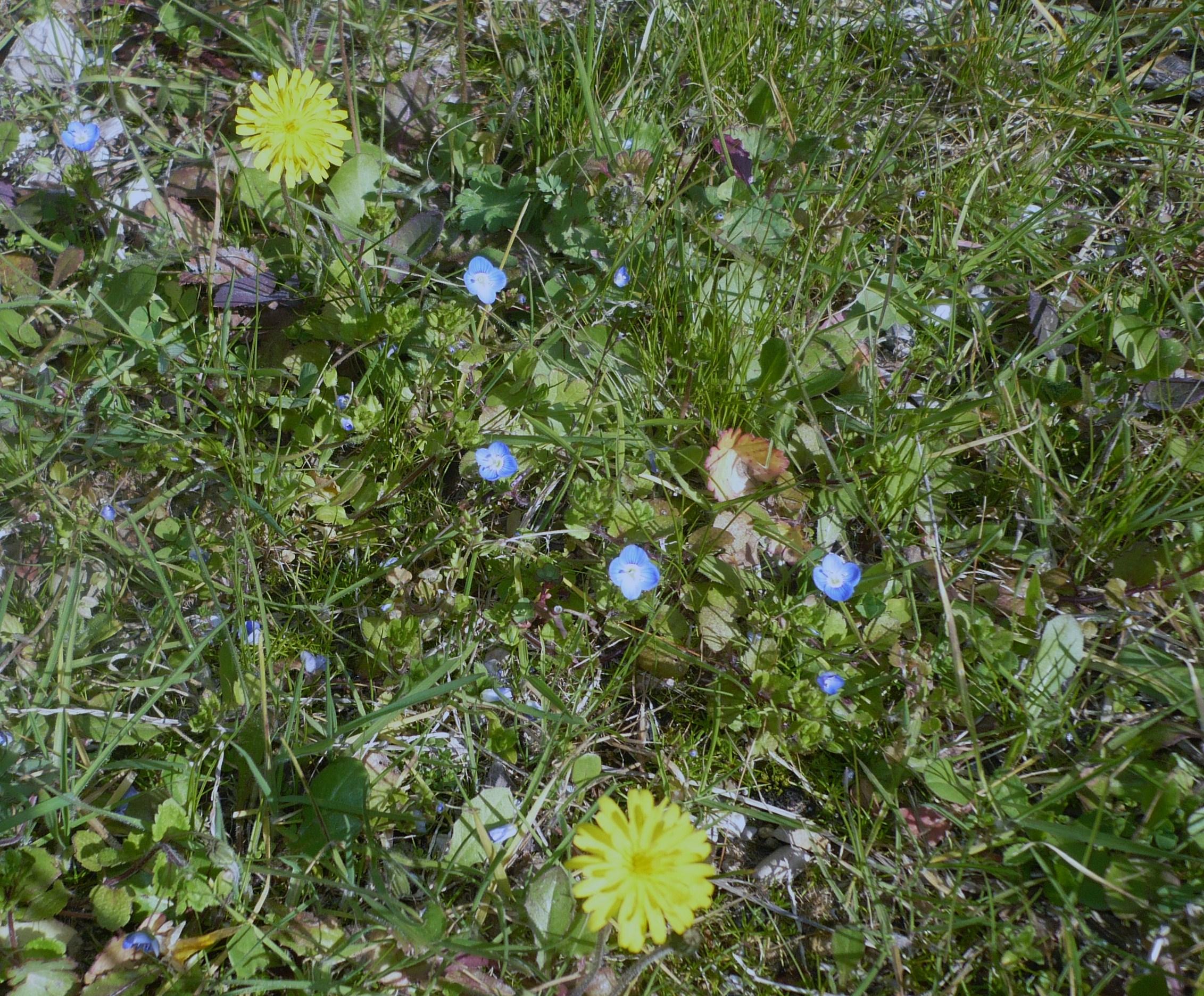 les-petites-fleurs-bleux-017.JPG