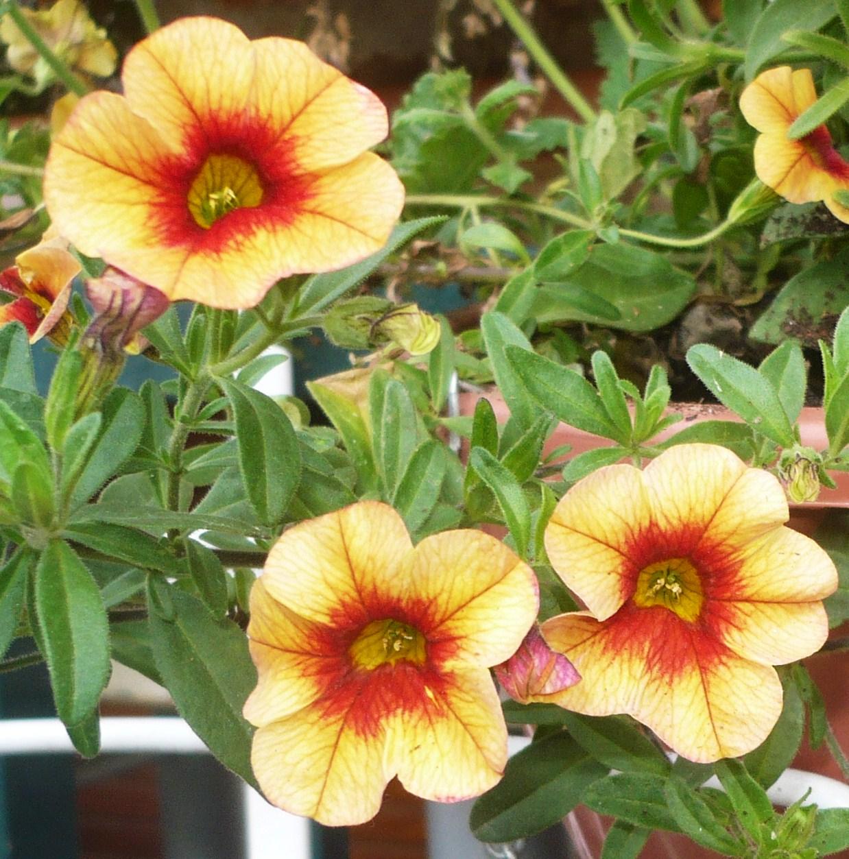 fleurs-de-la-fete-des-meres-003.JPG