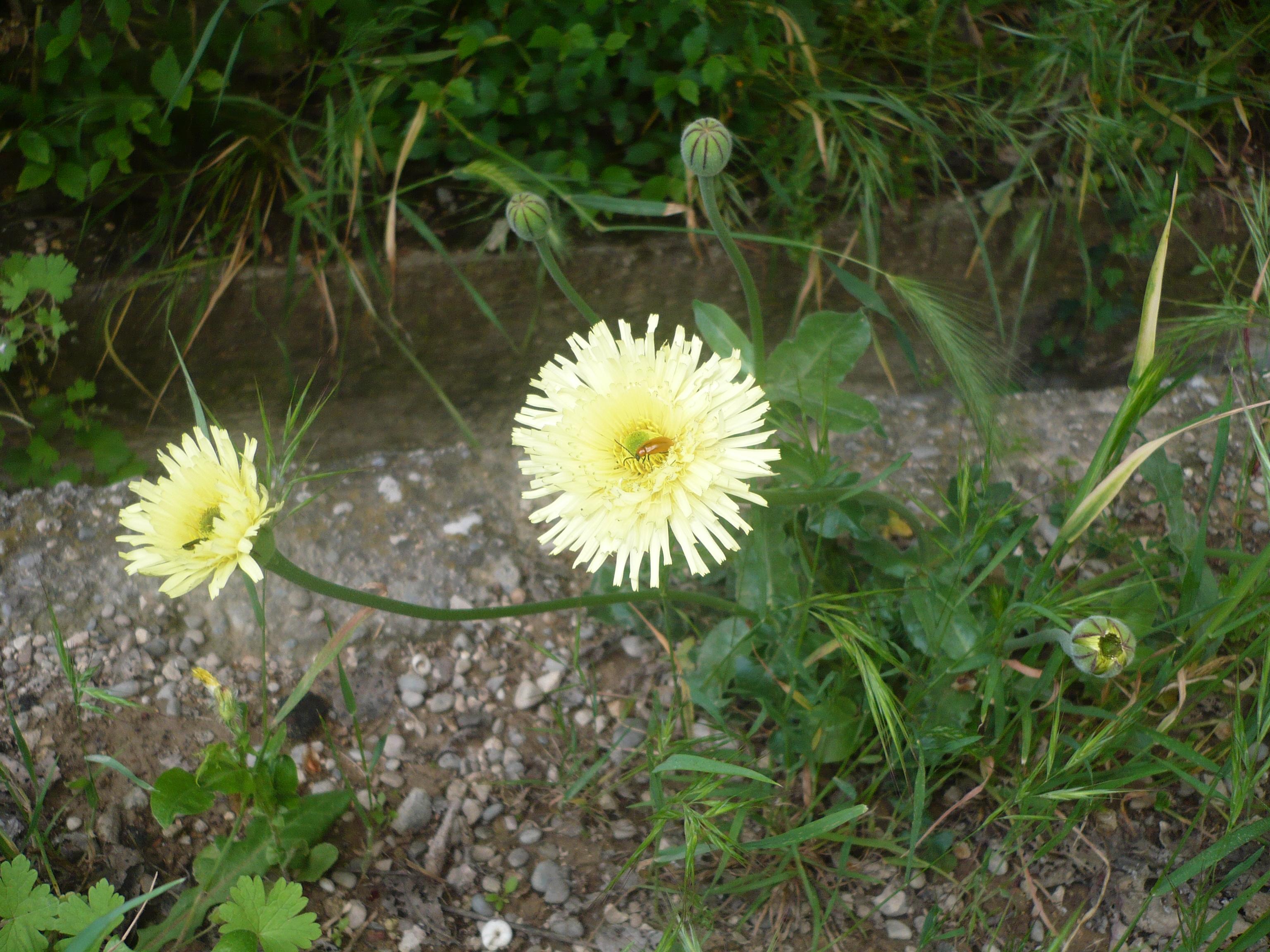 la-fleur-en-question-001.JPG