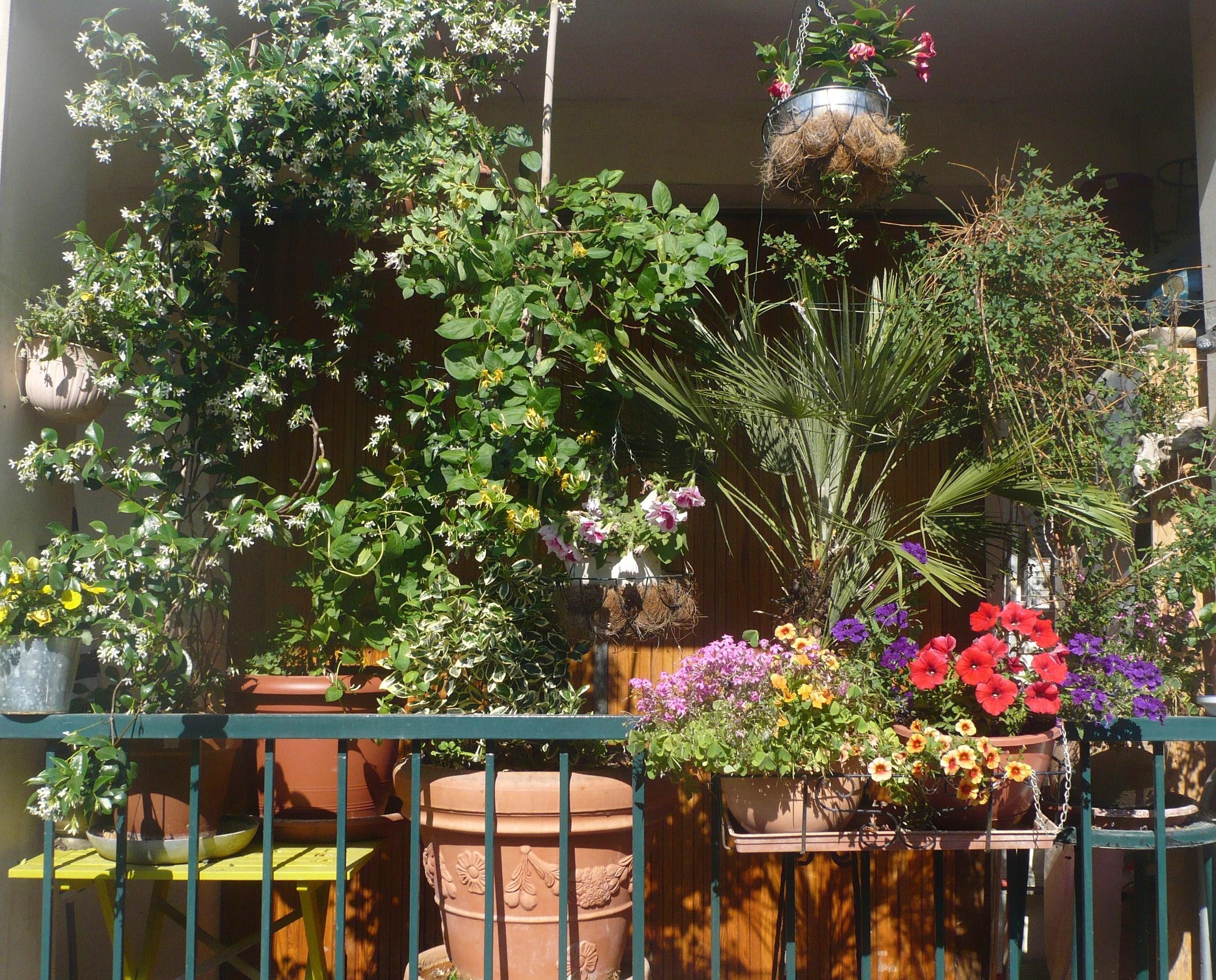 fleurs de balcon plein soleil with fleurs de balcon plein. Black Bedroom Furniture Sets. Home Design Ideas