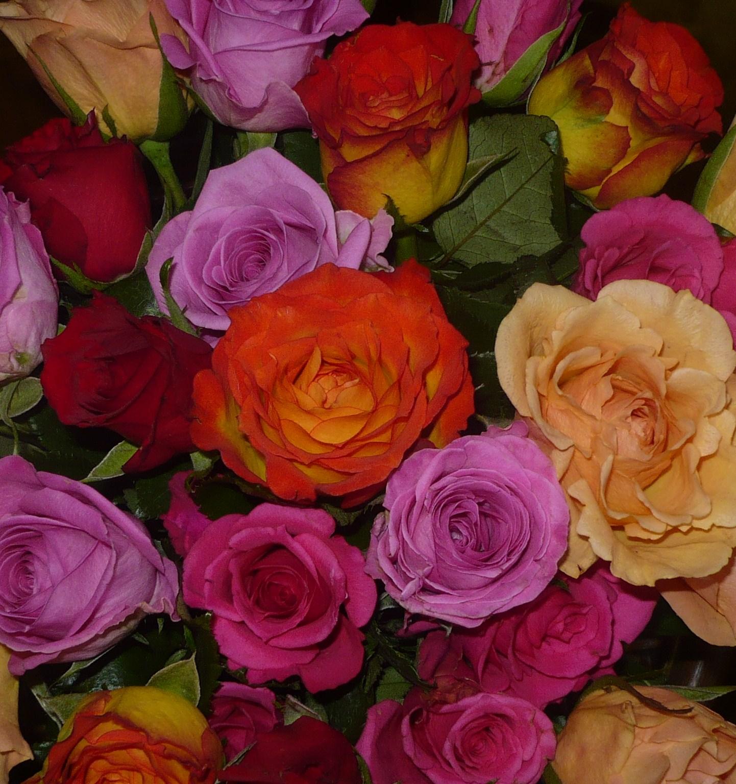les-roses-de-la-fete-des-meres-004.JPG