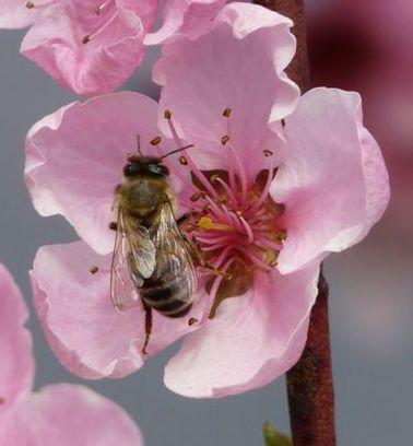 a-einstein-une-abeille-de-mick.jpg