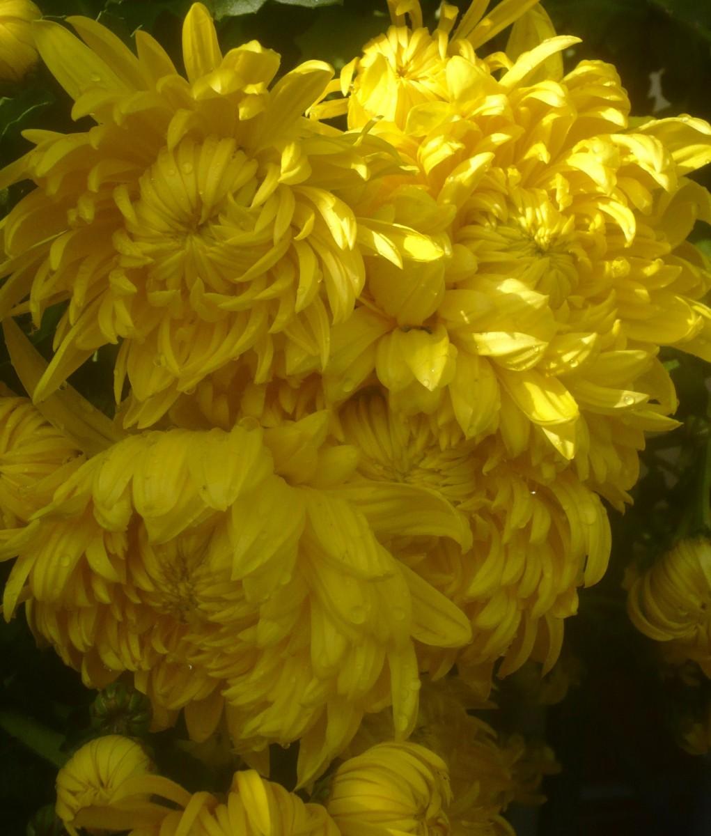 mort-dune-fleur-013-1600x1200.JPG