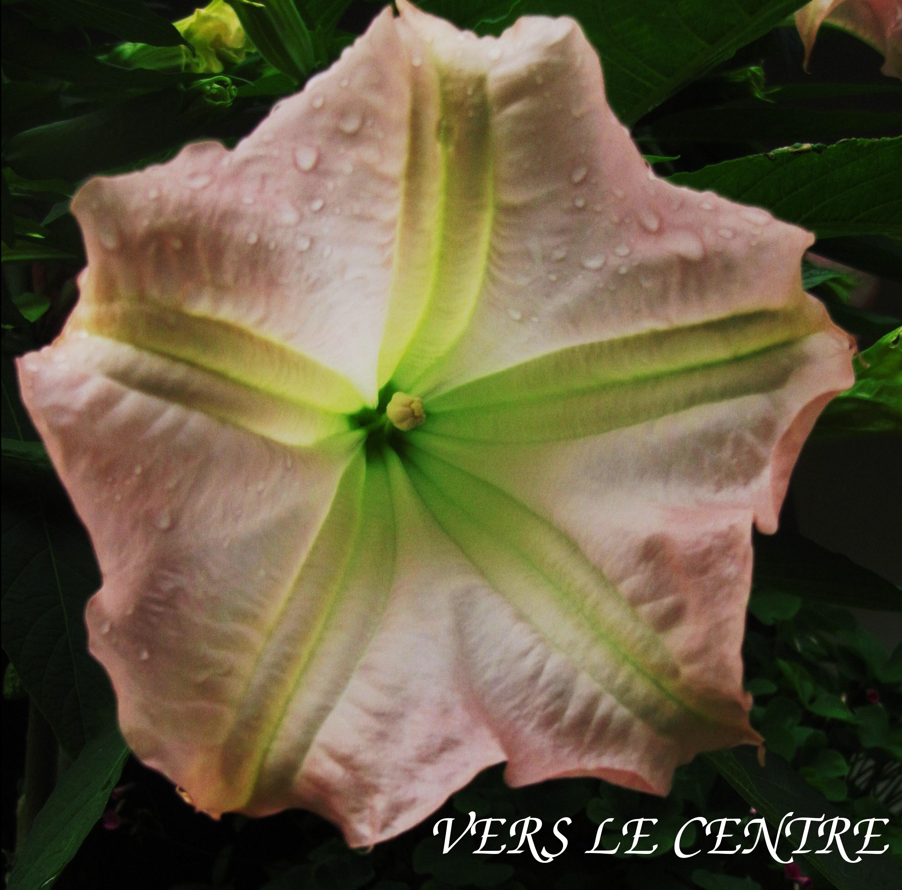 roses-doctobre-apres-la-pluie-012.JPG