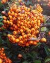 les-fruits-de-lautomne-021.JPG