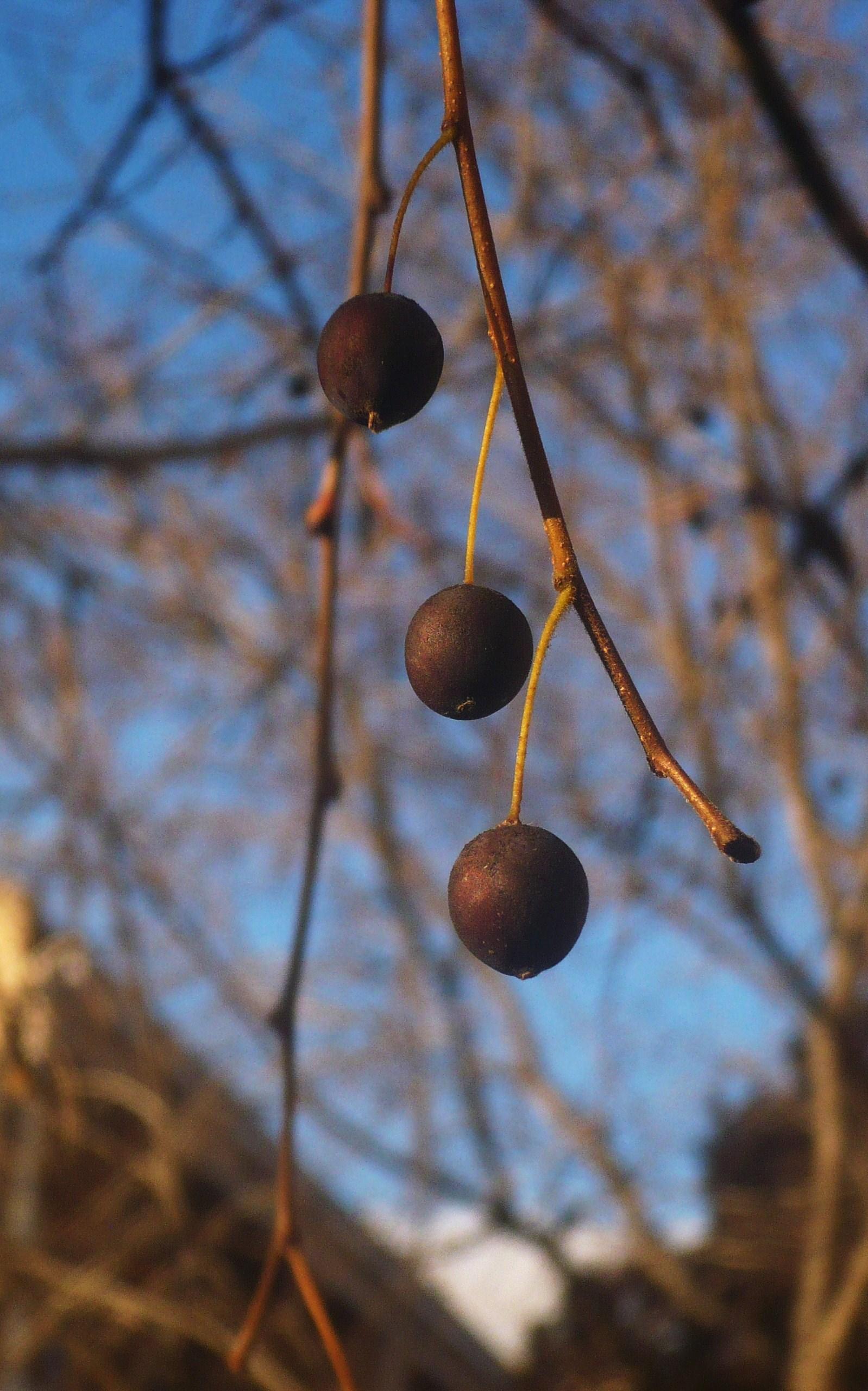les-fruits-de-lautomne-023.JPG