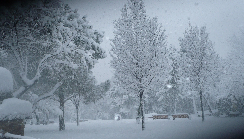 neige-8janvier-09-055.JPG