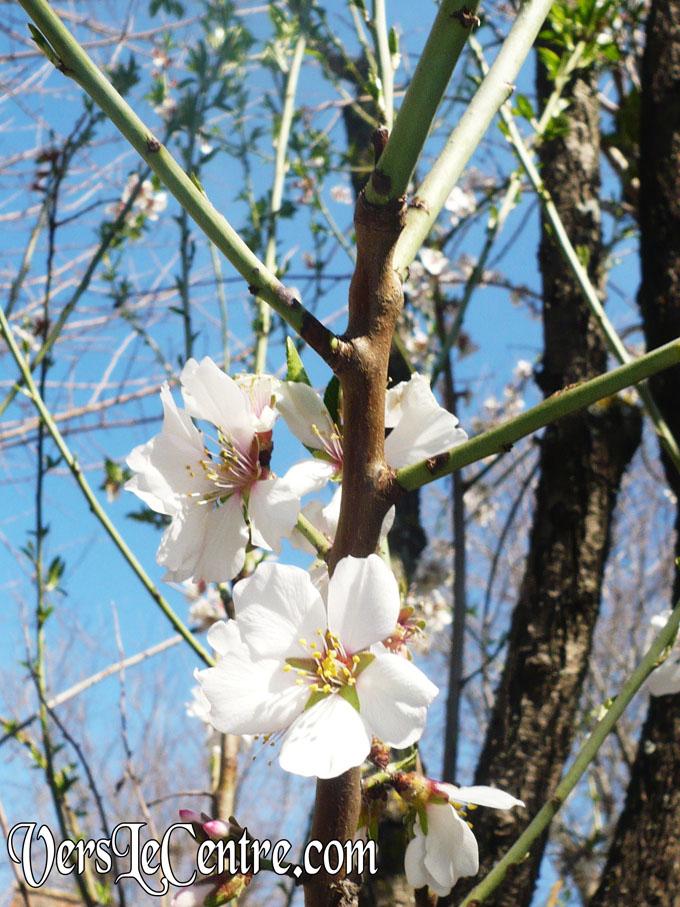 les-petites-fleurs-bleux-0062.JPG