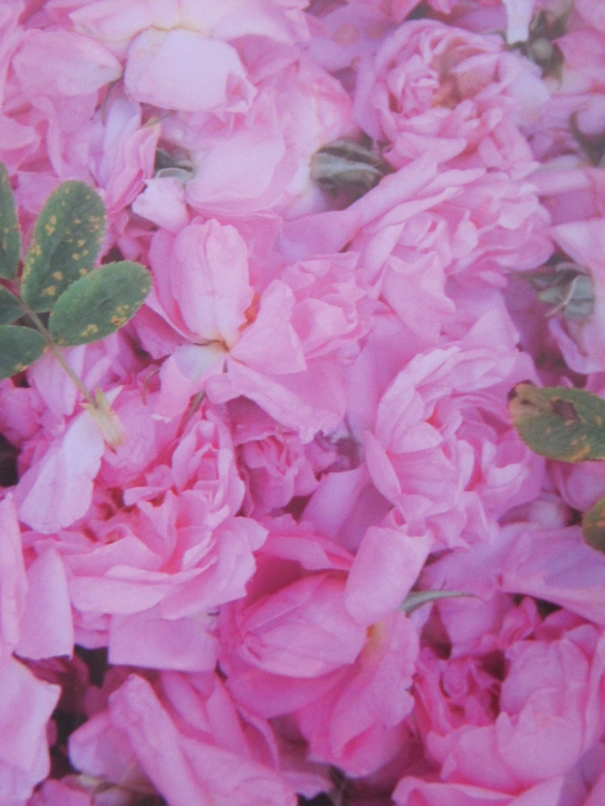 la-vie-en-roses-001.JPG