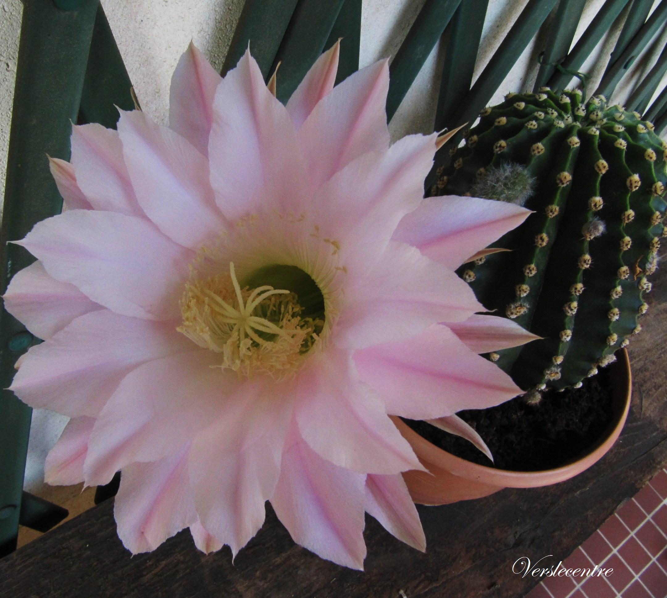 fleur « vers le centre