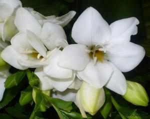 fleurs du bouquet du mois d'aôut 001 - Copie (2)