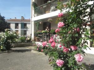 roses de mai et roseraie tigrou tina 021