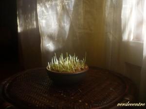 les blé en herbe 001 [1600x1200]
