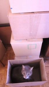 cartons de déménagement 002
