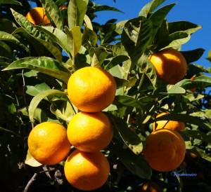 orange 180
