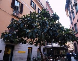 Milan  2015 073