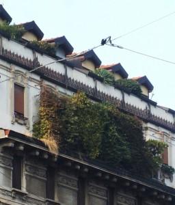 Milan  2015 272