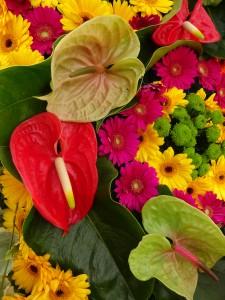 Fleurs Hyèroises 030