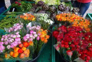 Fleurs Hyèroises 074