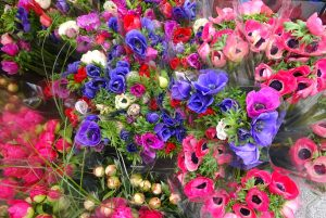 Fleurs Hyèroises avril 2016 034