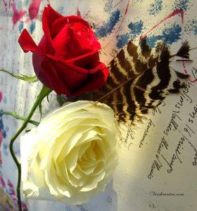 roses-et-poesie-003